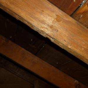 Example of evidence of wood destroying insects in the attic structure.
